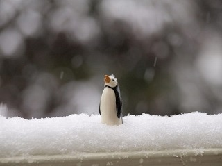 ニセコスキー場の雪質・降雪量
